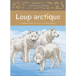 Loup articque